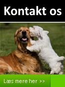 Kontakt Hundepension Lillebo på Fyn her